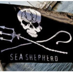Sea Shepherd unites with Brock Cahill for his mission to save sea turtles from the BP Oil Spill